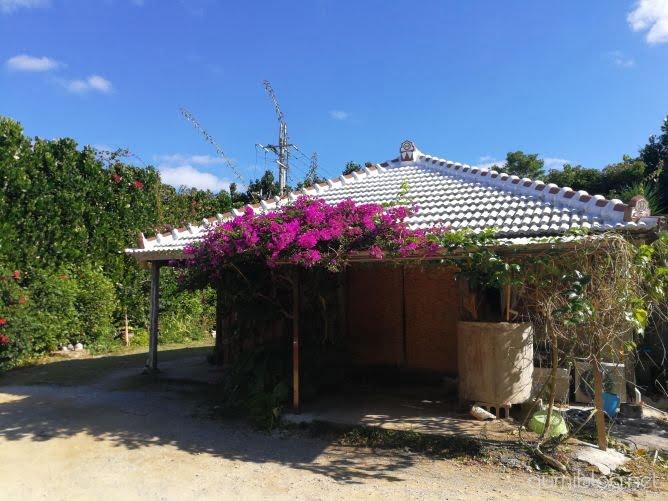 今帰仁そばは雰囲気は琉球古民家がステキ!フクギとお花に囲まれている