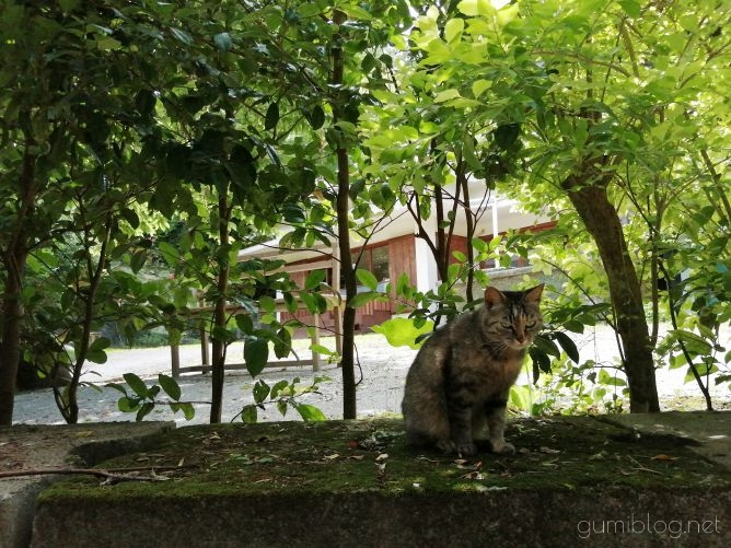 森にひっそり佇む焼き菓子店「Himbeere(ヒムベーレ)」@沖縄本島本部のネコ画像