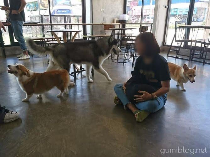ドリンク付き150฿で楽しめる犬カフェ【Hong Hong Dog Cafe】タイ・パタヤ店内画像