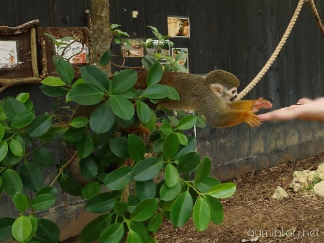 日本でココだけ!ヤシ並木がある東南植物楽園の楽しみ方3つ!割引有