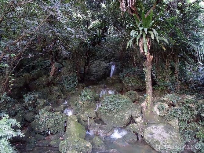 那覇にあるホタルの名所【末吉公園でホタル観賞レポート】見頃時期や時間など