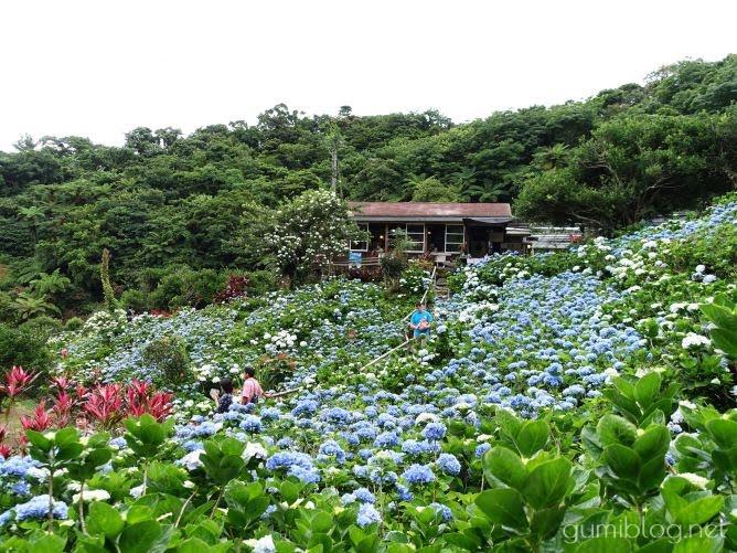 沖縄本島の梅雨の人気スポット!南国のお花も楽しめる【よへなあじさい園】本部のカフェ画像