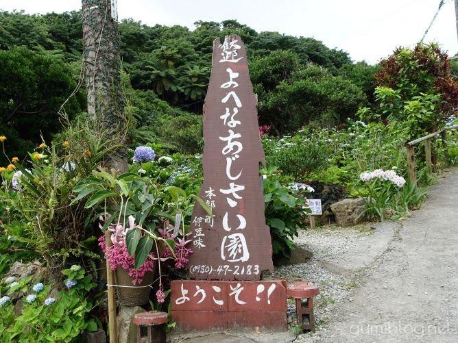 沖縄本島の梅雨の人気スポット!南国のお花も楽しめる【よへなあじさい園】本部