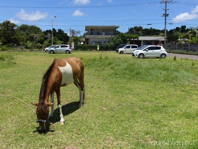 牛汁専門店「新垣食堂」の馬