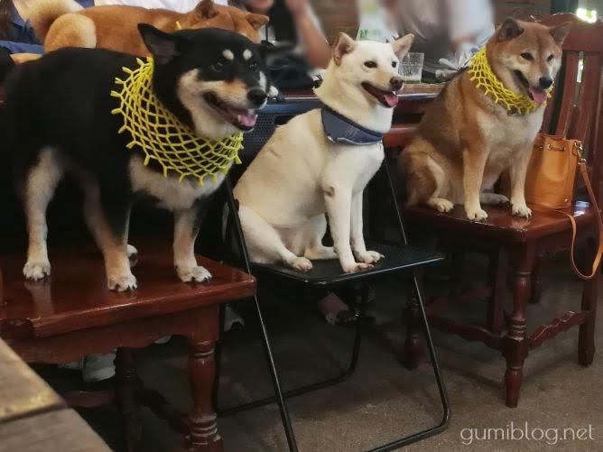 ホアヒンの柴犬カフェ「Inu Cafe」