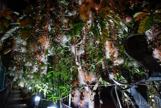 首里崎山町サガリバナ並木の観賞レポート