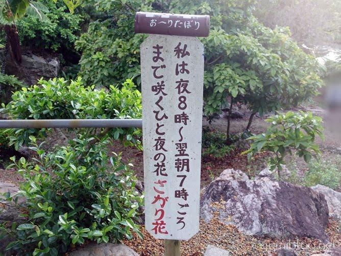 まとめ:初夏に石垣島を訪れたら「サガリバナ観賞」を楽しもう