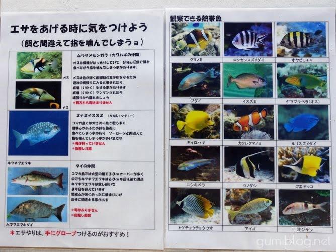 コマカ島で観察できる熱帯魚