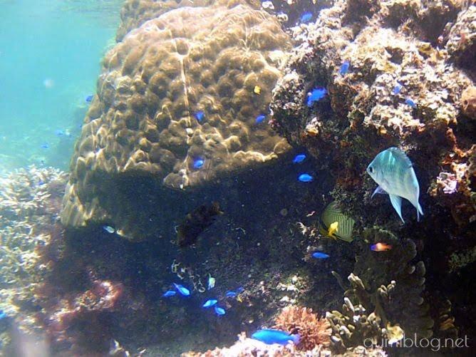 米原ビーチは浅瀬でもカラフルな熱帯魚がたくさん!ニモも