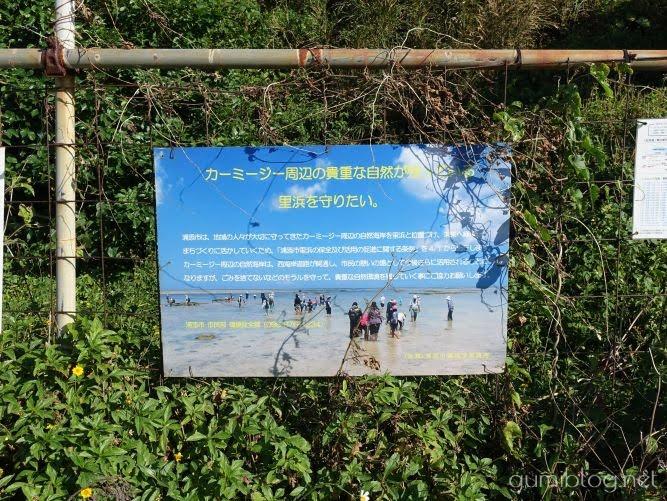 まとめ:浦添の海「カーミージー」はカラフルなサンゴや生き物が暮らす天然ビーチ