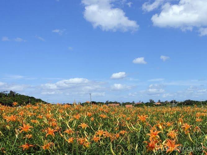 沖縄のクワンソウ農園「今帰仁ざまみファーム」では花畑散策と花摘み体験できる!