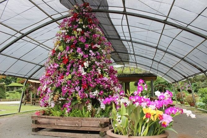 ビオスの丘「花のクリスマス2020」