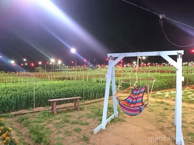 Sunset Farm Okinawa(サンセットファーム)「キクミネーション」