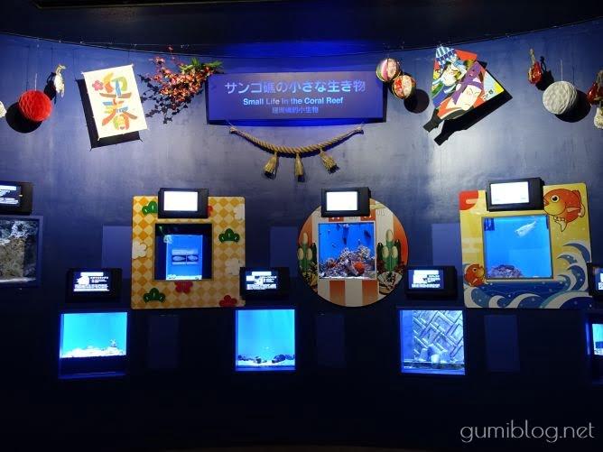 【丑(うし)年】にちなんだ海の生き物を「美ら海水族館」で見てきた@沖縄