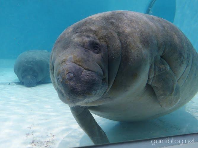 まとめ:「丑年」にちなんだ海の生き物は意外とたくさん!ぜひ美ら海水族館で探してみてね