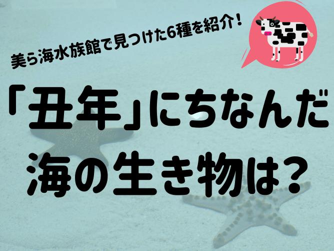 「丑年」にちなんだ海の生き物6選!沖縄・美ら海水族館で見つけたウシ