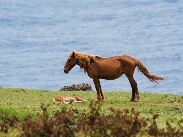 沖縄にしかない動物は「イリオモテヤマネコ・ヨナグニウマ・オキナワトゲネズミ」など