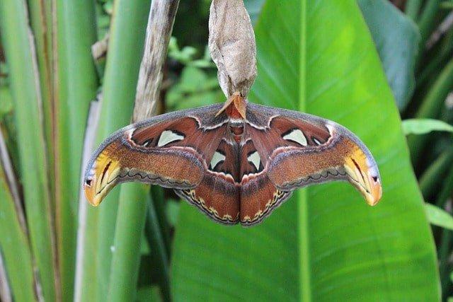 沖縄にしかいない昆虫は「ヤンバルテナガコガネ・フタオチョウ・ヨナグニサン」など