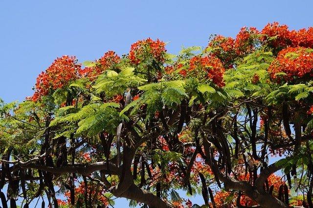 【沖縄にしかない植物編】-沖縄にしかないものまとめ