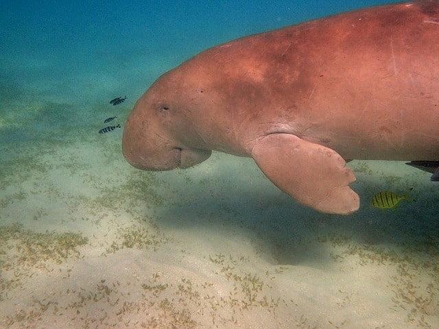 沖縄にしかいない海の生き物は「ジュゴン・リュウキュウダカラ・オキナワヤワラガニ」など