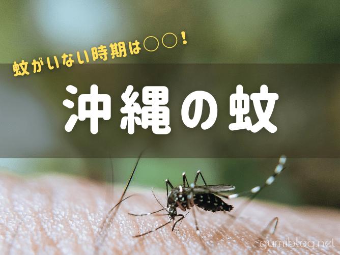 【実体験】沖縄で蚊がいない時期は?いつからいつまで刺す?蚊対策付