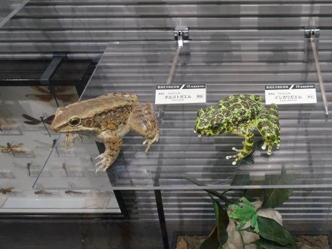まとめ:沖縄にしかない生き物はたくさん!沖縄ならではの出会いを楽しもう