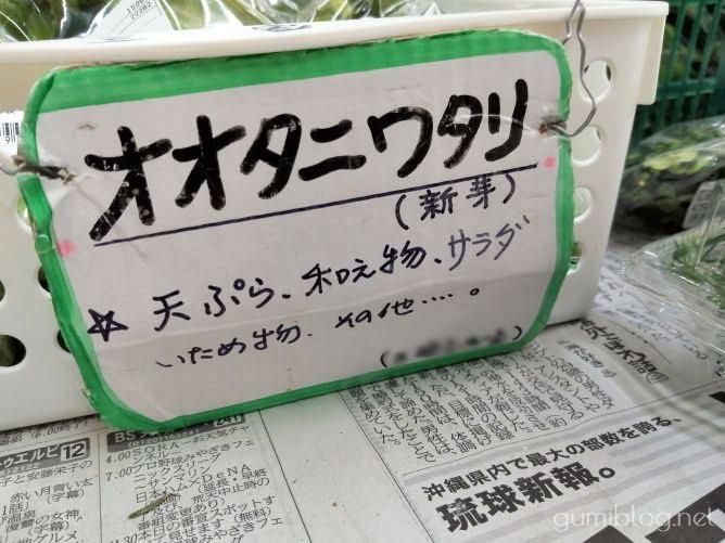オオタニワタリの簡単レシピ3選(炒め物・おひたし・天ぷら)