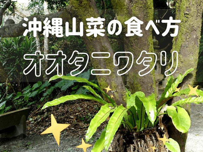 【沖縄野菜】オオタニワタリの食べ方と販売場所!やんばるの森でも発見
