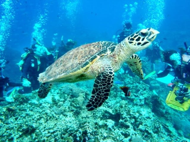 沖縄アクティビティランキング3位:体験ダイビング・スキューバダイビング