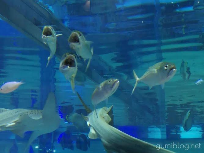 沖縄の美ら海水族館やライカム(イオン)にも