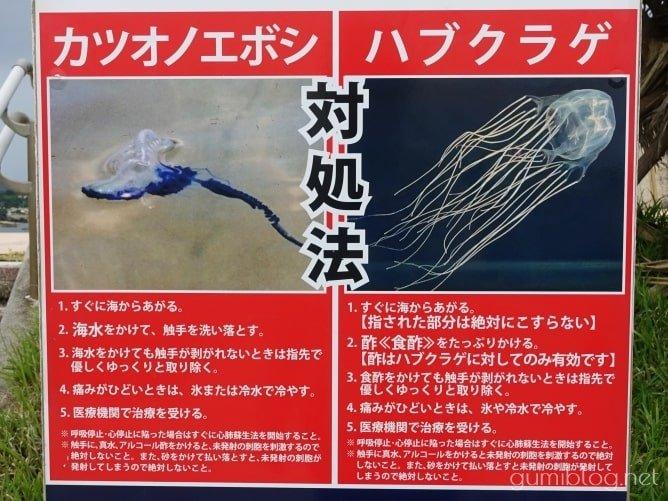 沖縄のシュノーケリング中に見かける危険な生き物