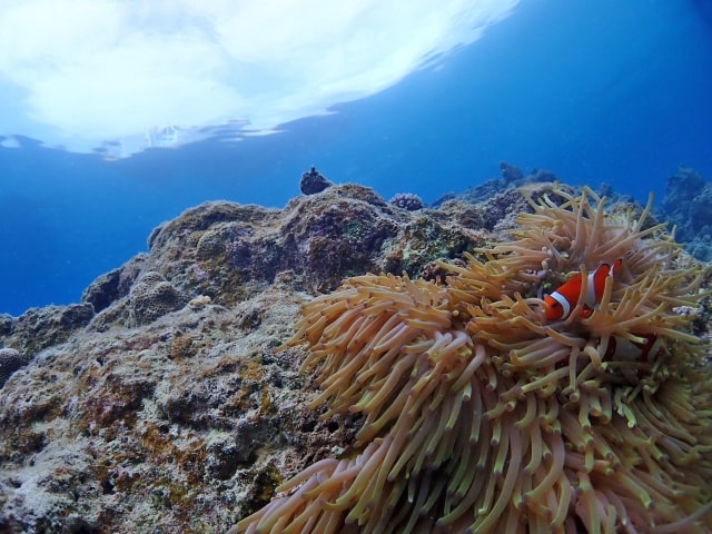 沖縄の9月の海は泳げる?海水浴の水温・クラゲについて