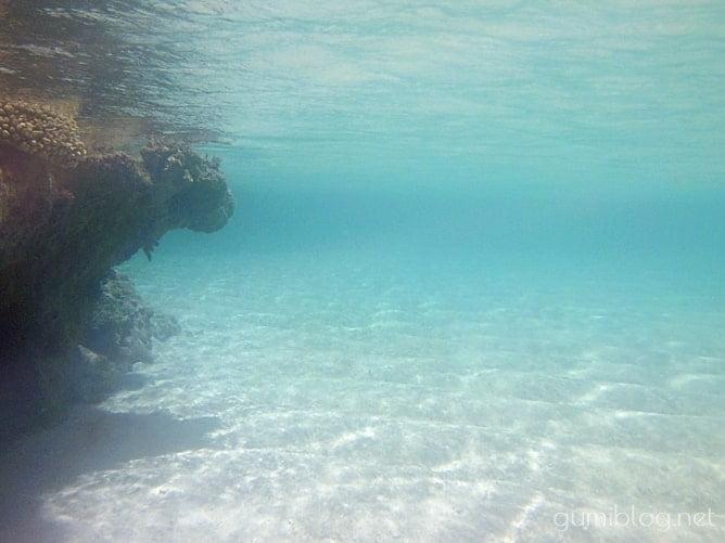百合ヶ浜の海のなか