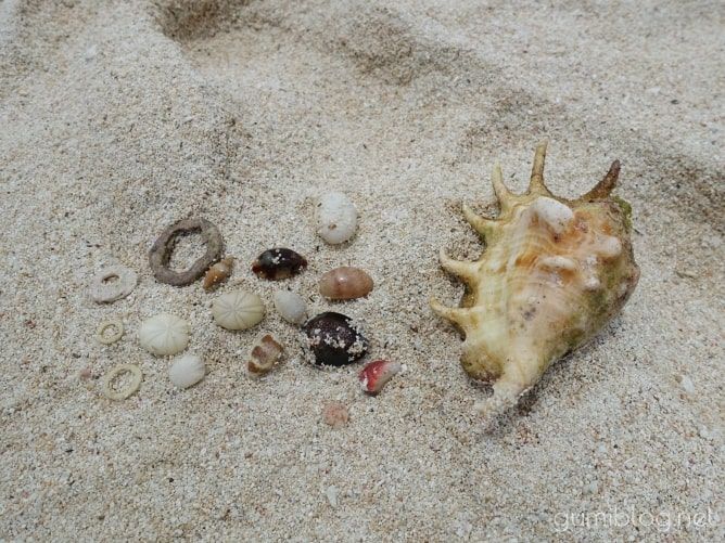与論島の百合ヶ浜でビーチコーミング
