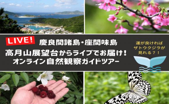 座間味島からライブでお届け!オンライン自然観察ガイドツアー