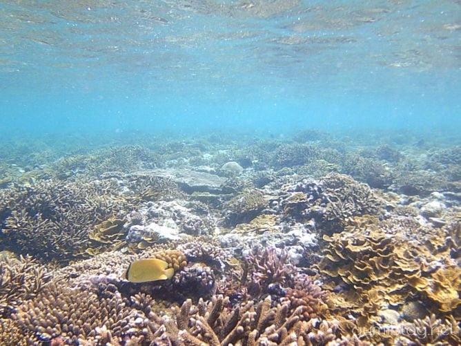 古宇利島のトケイ浜の魚