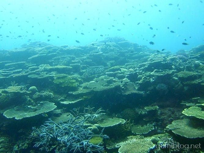 古宇利島のトケイ浜のシュノーケリングで出会ったお魚や生き物