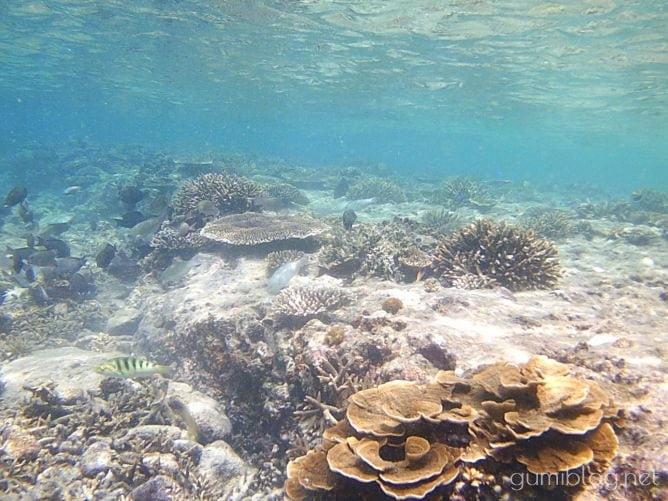 古宇利島のトケイ浜の浅瀬でシュノーケリング