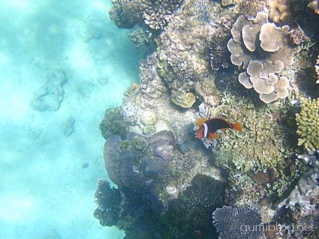 ゴリラチョップで見られる魚