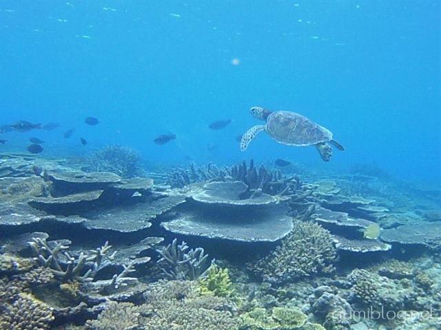 沖縄本島ビーチシュノーケリングでウミガメに会えるポイント